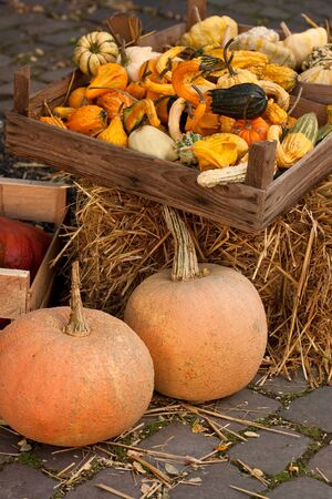 thanksgiving pumpkins on straw with box in natural colors at daylight photo