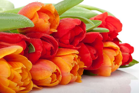 colorful fresh red and orange tulips with water drops isolated on white background photo