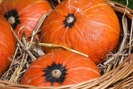thanksgiving pumpkins in basket with straw in natural colors at daylight