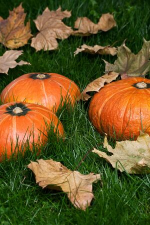 thanksgiving pumpkins on grass with autumn leafs in natural colors at daylight Stock Photo