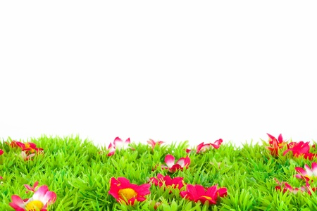green meadow with flowers with white background