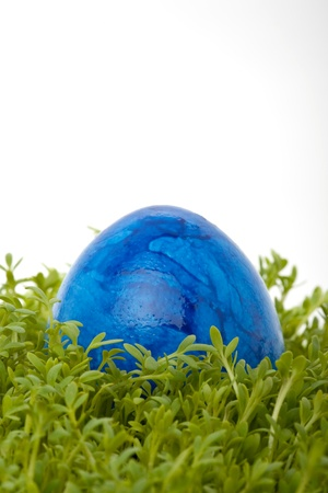 closeup of a colorful blue easter egg on cress isolated against white background