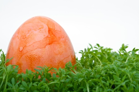 closeup of a colorful orange easter egg on cress isolated against white background Stock Photo