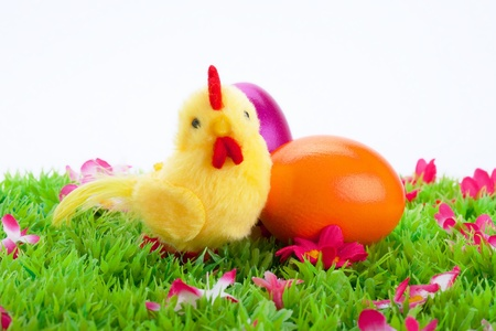 yellow chick with colored Easter eggs on a green field with flowers isolated on white background