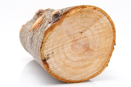 closeup of one single piece of firewood isolated on white background Stock Photo - 17285182
