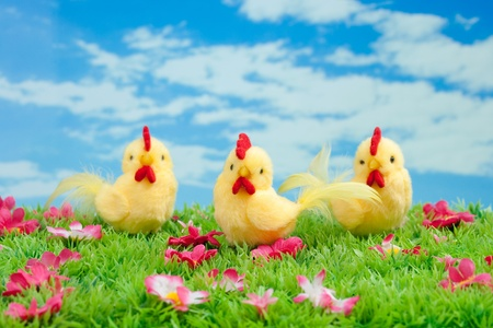 Easter: three yellow chicken sitting on a green meadow with flowers in front of a blue sky with white clouds