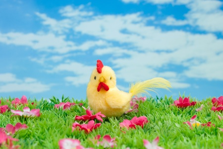 Easter: yellow chicken sitting on a green meadow with flowers in front of a blue sky with white clouds