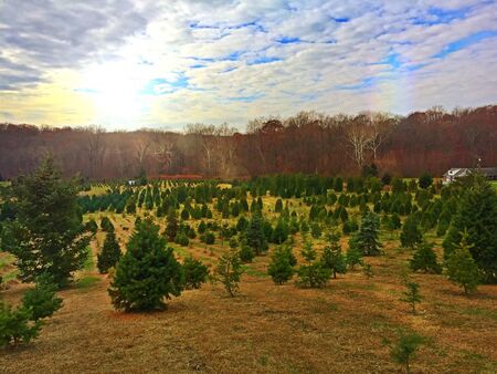 A beautiful sunny day at Frostee Christmas Tree Farm in Perry Hall, Maryland. Stock Photo