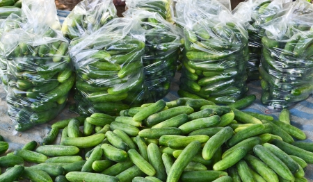 ripe cucumber in package form garden of thailand Stock Photo
