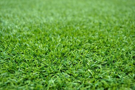 texture of turf Banque d'images