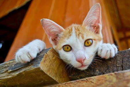 southeast asia: asia cat nice eye of thailand southeast asia