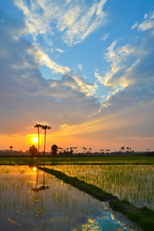 Sunset On The Grain Farm Good View Of Thailand Stock Photo