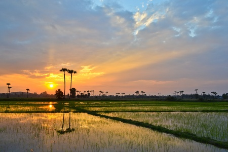 Sunset On The Grain Farm Good View Of Thailand photo