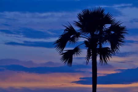 sihouette: palm tree sihouette on twilight time