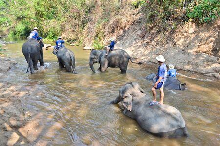 asia elephant flock bathe in camp