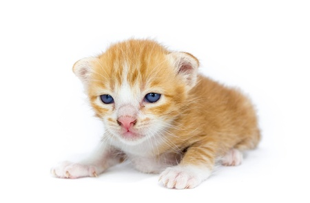 cute asia kitty cat Stock Photo