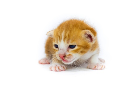 lain: cute asia kitty cat Stock Photo