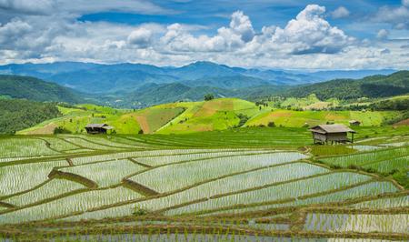bong: Beautiful Terrace Rice Farm Of Pa Bong Peang Ching Mai, Thailand