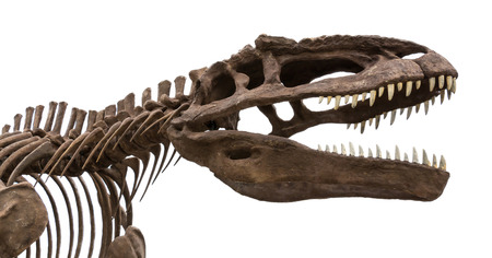 dinosaur fossil isolated Stock Photo