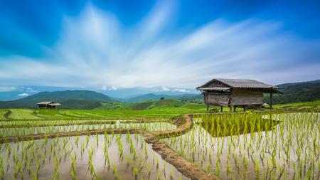 Terraced Rice Farm On Rainy Season Of PaBongPeang Chiang Mai, Thailand