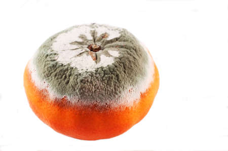 mouldy: Mouldy Orange