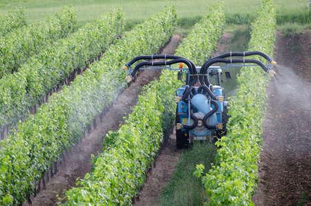 Sprühen von Reben im Weinberg in Frankreich Standard-Bild