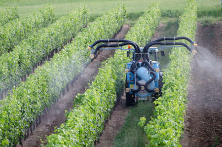 chemical fertilizer: Spraying of grapevines in vineyard in france
