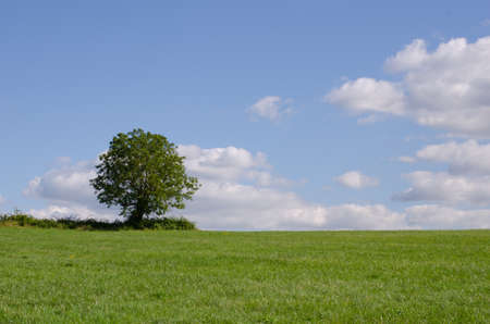 Single tree in a large green field with blue sky