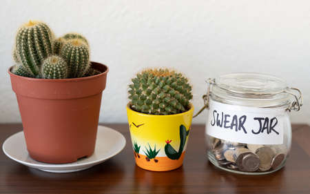Swear jar on a shelf with potted plants