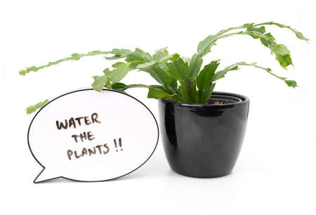 Reminder to water the plants next to a house plant on white background