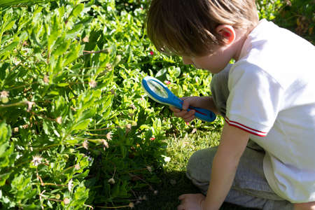 Little boy looking for bugs using a magnifying glass in the garden