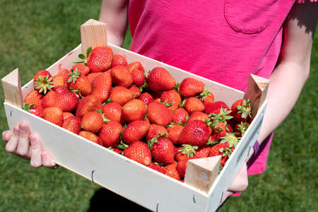 Young girl holding a crate of fresh strawberries
