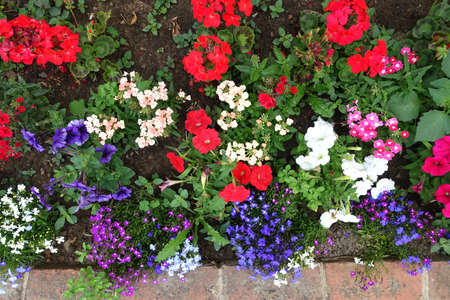 Top view of a flower bed full of colourful perennials