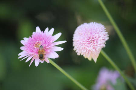Flower blooming and bee Stock Photo