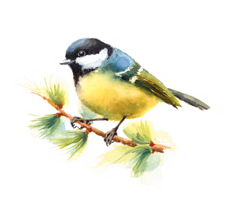 chickadee: Watercolor Bird Tit On The Branch Hand Drawn Illustration isolated on white background
