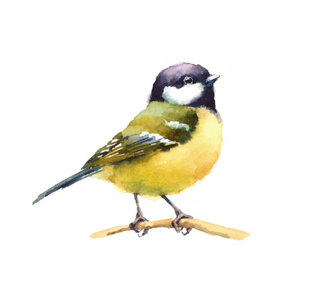 Watercolor Bird Tit On The Branch Hand Drawn Illustration isolated on white background