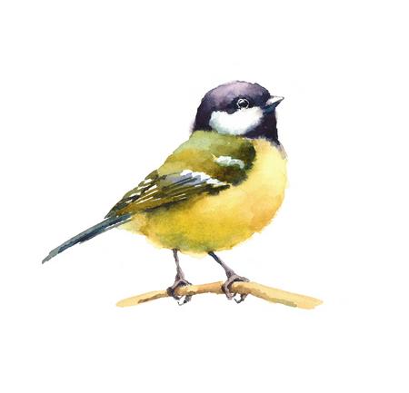 Waterverf Bird Tit Op De Tak Hand Getekende Illustratie Geïsoleerd op een witte achtergrond