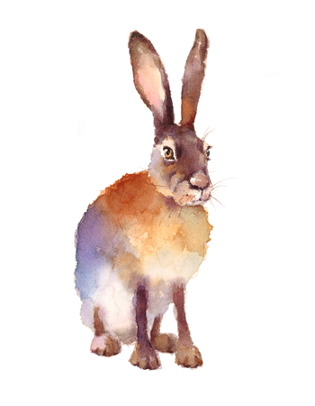 Hare watercolor illustration hand painted isolated on white background 版權商用圖片