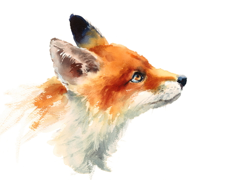 Fox looking up watercolor illustration hand painted isolated on white background 스톡 콘텐츠