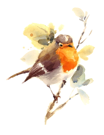 Watercolor Bird Robin on the Branch Hand Drawn Fall Illustration isolated on white background 版權商用圖片