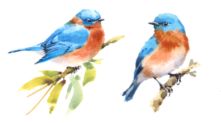 Bluebirds Two Birds Watercolor Hand Painted Illustration Set isolated on white background