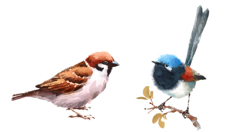 Fairy Wren and Sparrow Two Birds Watercolor Hand Painted Illustration Set isolated on white background