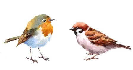 Pájaro y gorrión Dos pájaros Acuarela Ilustración pintada a mano Conjunto aislado sobre fondo blanco Foto de archivo - 82544783
