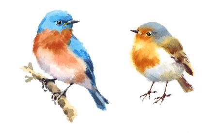 Robin en Sialia Twee Vogelswaterverf Hand Geschilderde Illustratie die op witte achtergrond wordt geïsoleerd