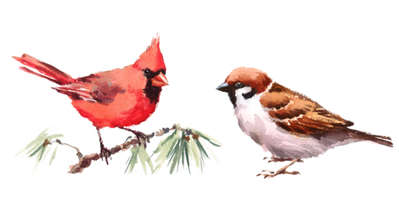 Northern Cardinal and Sparrow Two Birds Watercolor Hand Painted Illustration Set isolated on white background