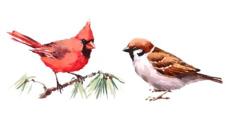 Northern Cardinal and Sparrow Two Birds Watercolor Hand Painted Illustratie Set geïsoleerd op witte achtergrond