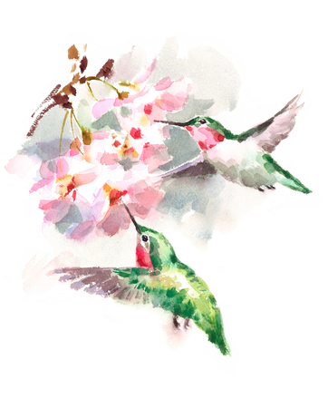 Watercolor Birds Hummingbirds Flying Around the Cherry Blossoms Flowers Hand Drawn Summer Garden Illustration isolated on white background Stock Photo
