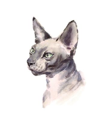 Aquarel Sphynx kat Hand getekend huisdier portret illustratie geïsoleerd op een witte achtergrond Stockfoto