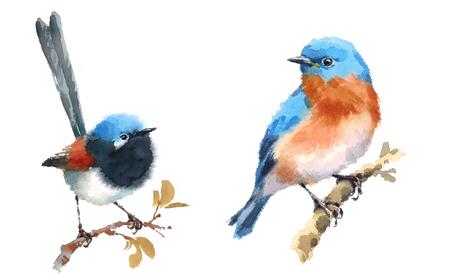 Fairy Wren and Bluebird Twee Vogels Waterverf Handgeschilderde Illustratie Set geïsoleerd op een witte achtergrond