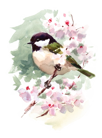 Watercolor Bird Tit Chickadee On Cherry Blossoms Branch Hand Painted Summer Spring Illustration 版權商用圖片